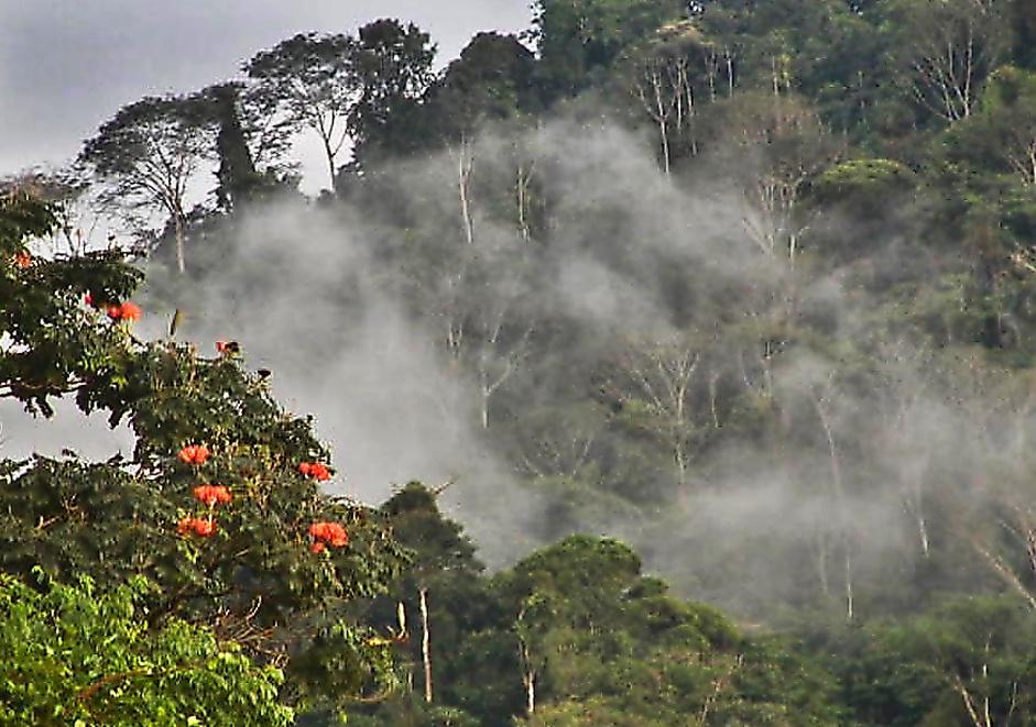 Costa Rica Real Estate - Cloud Forest Estate